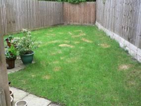 before irregular shaped garden